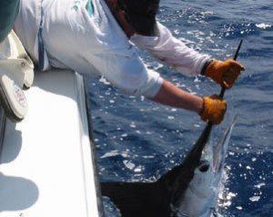 Deep Sea Offshore Marlin Fishing Charters in Venice Louisiana