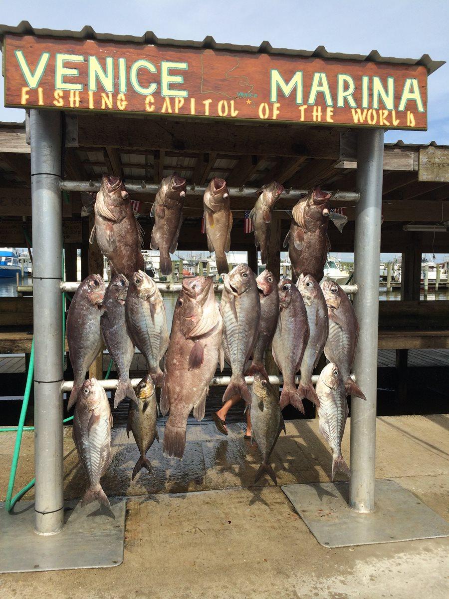 Venice offshore tuna fishing charters louisiana 41 for Venice louisiana fishing lodge