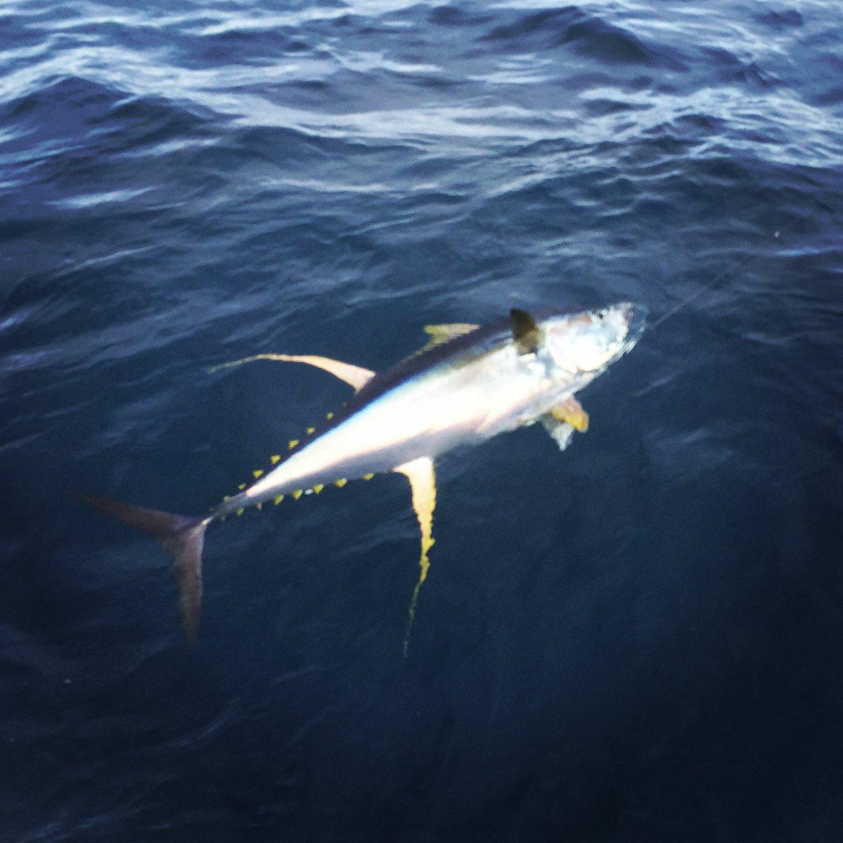 Venice offshore tuna fishing charters louisiana 60 for Deep sea fishing la