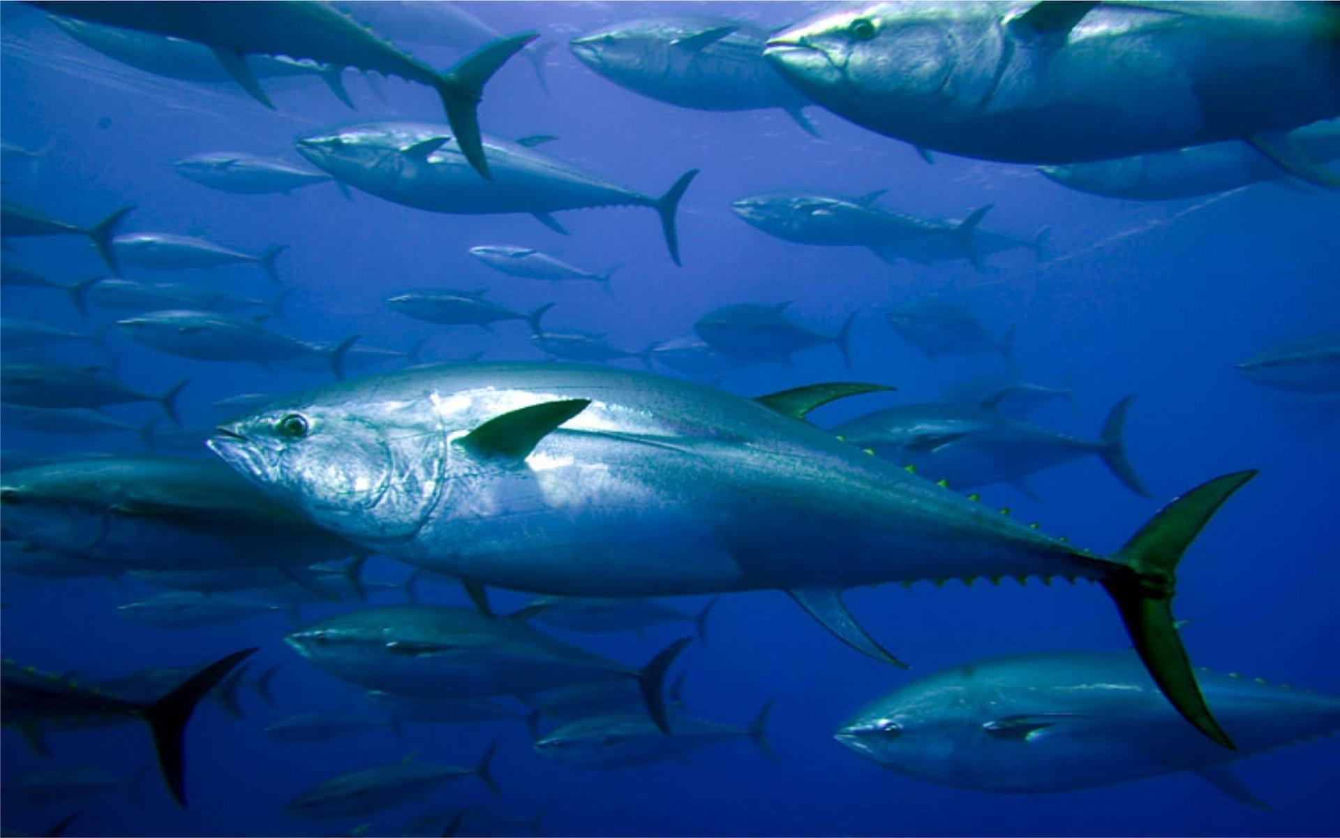 Offshore Fishing Louisiana   Charter Fishing   Voodoo ...